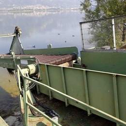 Alla fine il battello-spazzino è arrivato Da lunedì al lavoro per asportare le alghe