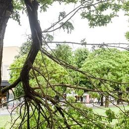 Piuro, il forte vento abbatte alberi e mette ko l'illuminazione