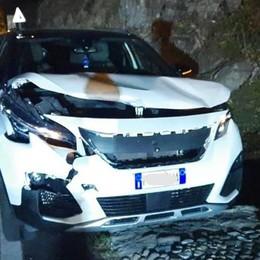 Cervo sulla Regina  Altra auto distrutta