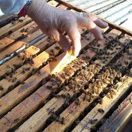 """""""Pazza"""" primavera in Valsassina  Api in sofferenza, miele con il contagocce"""