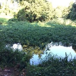 Merate, San Rocco diventa comunale  «Ora risaneremo il laghetto»